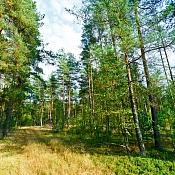 Усадьба «Мая Рудня»  , Беларусь - фото 3